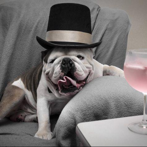 Sir Miles Gin